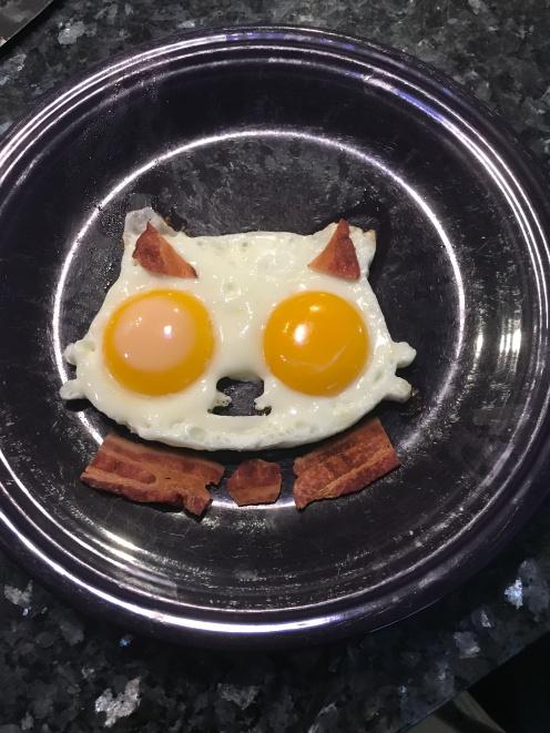 Cat egg